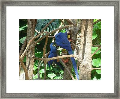 Two Birds Framed Print by Paula Ferguson