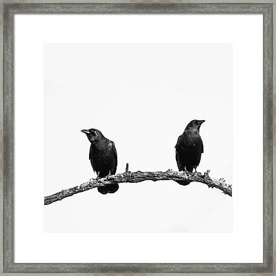 Two Black Crows One Branch White Square Framed Print by Terry DeLuco