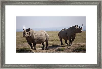 Two Black Rhinos In Solio Rhino Framed Print by Robin Moore