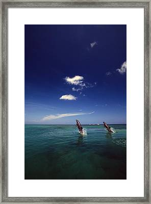 Two Bottlenose Dolphins Dancing Across Framed Print by Natural Selection Craig Tuttle