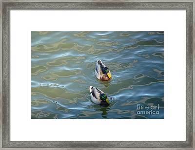 Two Brothers Framed Print by Jean Bernard Roussilhe