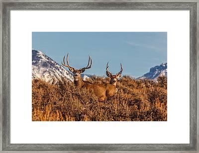 Two Bucks Glory Framed Print