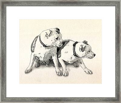 Two Bull Terriers Framed Print by Michael Tompsett