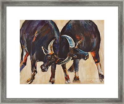 Two Bulls Fighting Framed Print