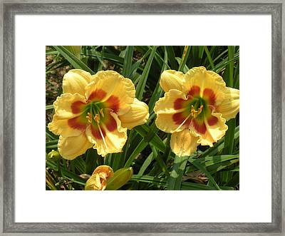 Two By Two Framed Print by Jeanette Oberholtzer