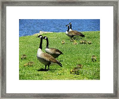 Framed Print featuring the photograph Two By Two  by Sandi OReilly