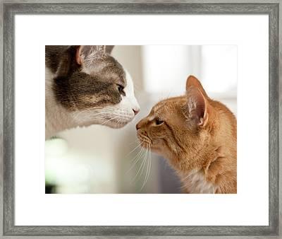Two Cats Almost Kissing Framed Print by Caro Sheridan / Splityarn