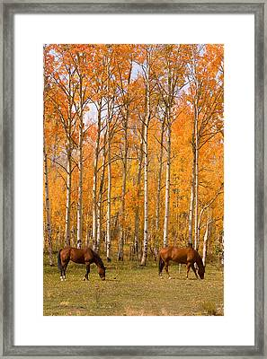 Two Colorado High Country Autumn Horses Framed Print by James BO  Insogna