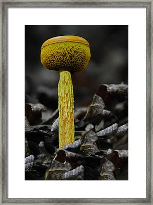 Two Colored Bolete Framed Print