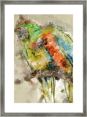 Two Colorful Macaws Digital Watercolor On Photograph Framed Print by Brandon Bourdages