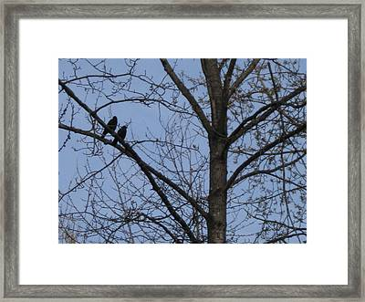 Framed Print featuring the photograph Two Crows by AJ Brown