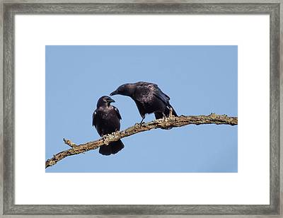 Two Crows On A Branch Framed Print by Terry DeLuco