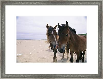 Two Curious Wild Horses On The Beach Framed Print by Nick Caloyianis