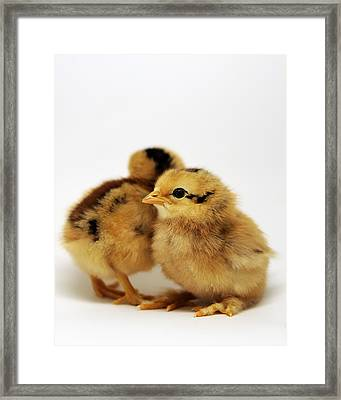 Two Cute Chicks Framed Print