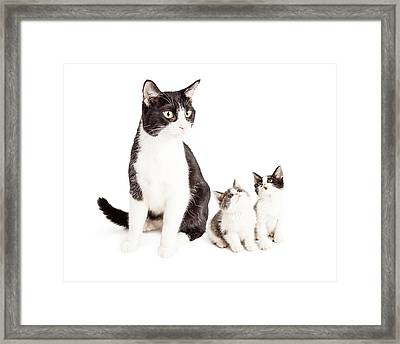 Two Cute Kittens Looking Up At Mom Cat Framed Print