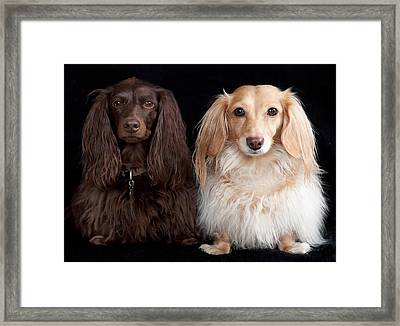 Two Dachshunds Framed Print