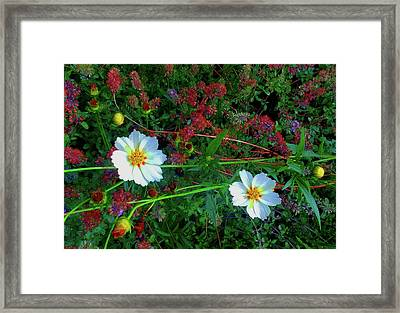 Framed Print featuring the photograph Two Daisies by Roger Bester