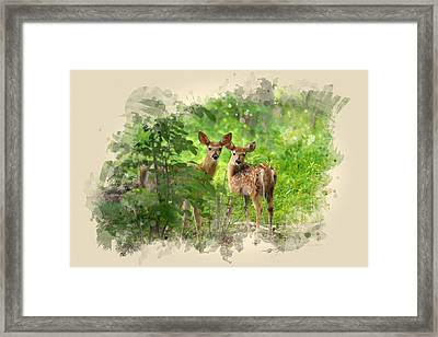 Two Deer Fawns Watercolor Art Framed Print