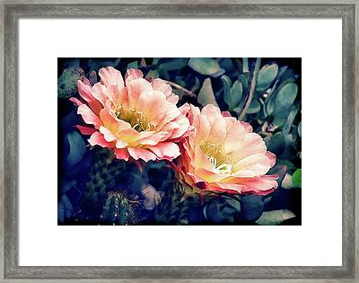 Two Desert Blooms Apricot Glow Framed Print
