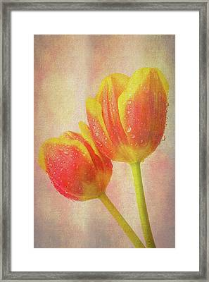 Two Dewy Tulips Framed Print