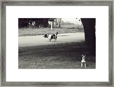 Little Pooch, Big Pooch Framed Print by Toni Hopper