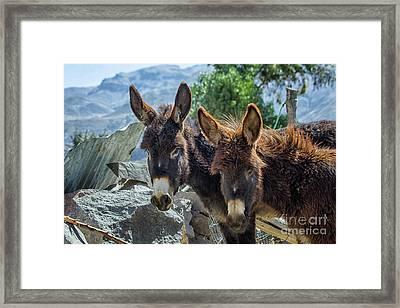 Two Donkeys Framed Print by Patricia Hofmeester