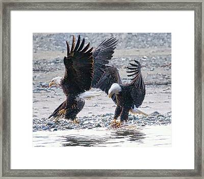 Two Eagles Framed Print by Clarence Alford