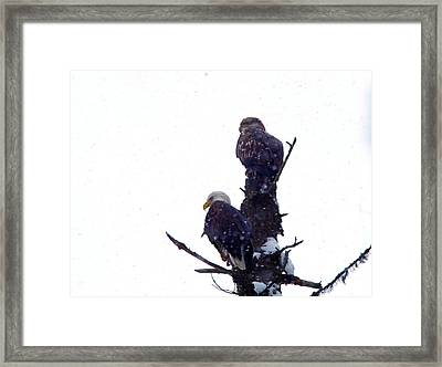 Two Eagles Tree Top  Framed Print by Jeff Swan