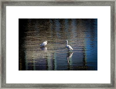 Two Egret's Fishing Framed Print