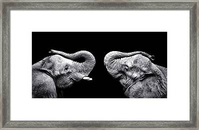 Two Elephants Face To Face Framed Print