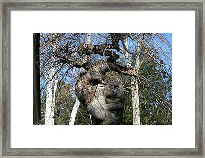 Two Elephants In A Tree Framed Print