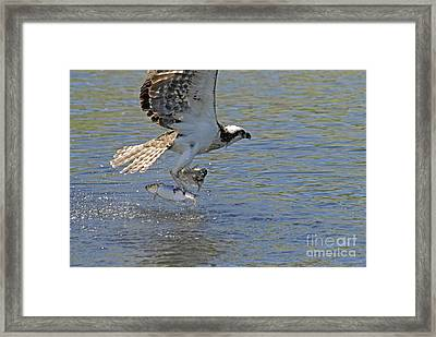 Framed Print featuring the photograph Two Fish by Alana Ranney