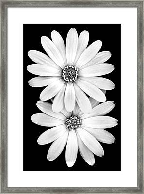 Two Flowers Framed Print by Az Jackson