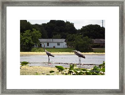 Two For One Framed Print by Jack Norton