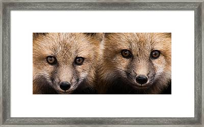 Two Fox Kits Framed Print by Mindy Musick King