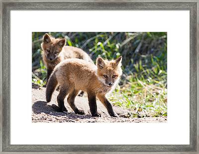 Two Fox Kits Playing Framed Print by Mindy Musick King