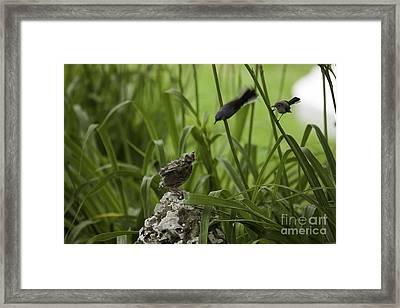 Two Friends Arrive 11 Framed Print by E Mac MacKay