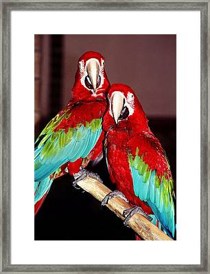 Two Friends ... Framed Print