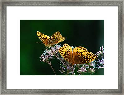 Two Fritillaries Framed Print