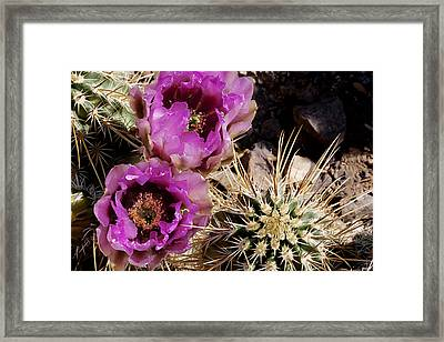 Framed Print featuring the photograph Two Fucshia Blossoms  by Phyllis Denton