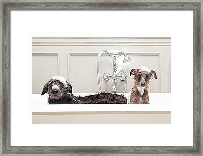 Two Funny Wet Dogs In Bathtub Framed Print by Susan Schmitz