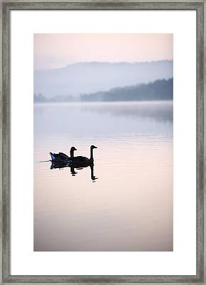 Two Geese On Lake With Fog And Forested Framed Print by Gillham Studios