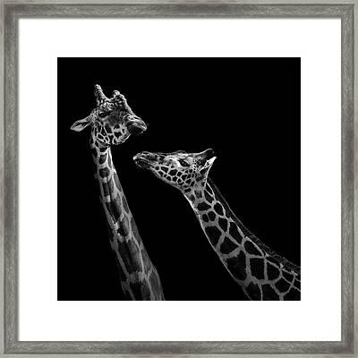 Two Giraffes In Black And White Framed Print