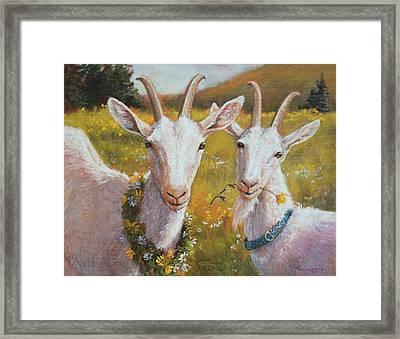 Two Goats Of Summer Framed Print