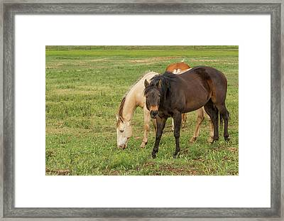Two Grazing Horses Framed Print by Jean Noren