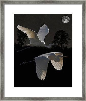 Two Great Egrets In Flight Framed Print by Eric Kempson
