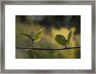 Two Green Butterflies Framed Print by Viktor Savchenko