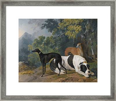 Two Greyhounds And A Mastif Belonging  Framed Print