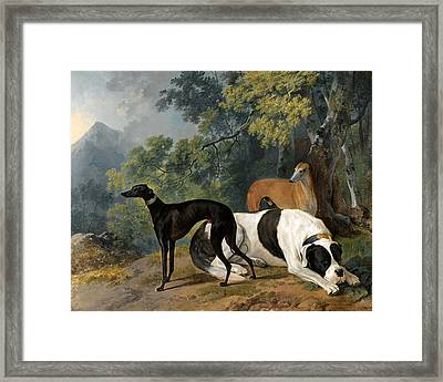 Two Greyhounds And A Mastif Belonging To The Duke Of Hamilton Framed Print