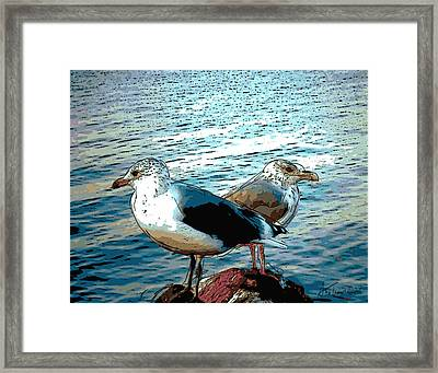 Two Gulls Framed Print